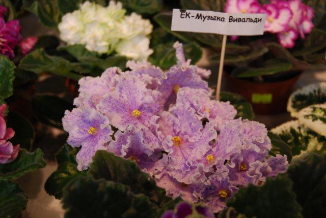 Международая выставка «Цветы.Ландшафт .Усадьба 2010» Астана - Страница 3 1b86a2e2fe61