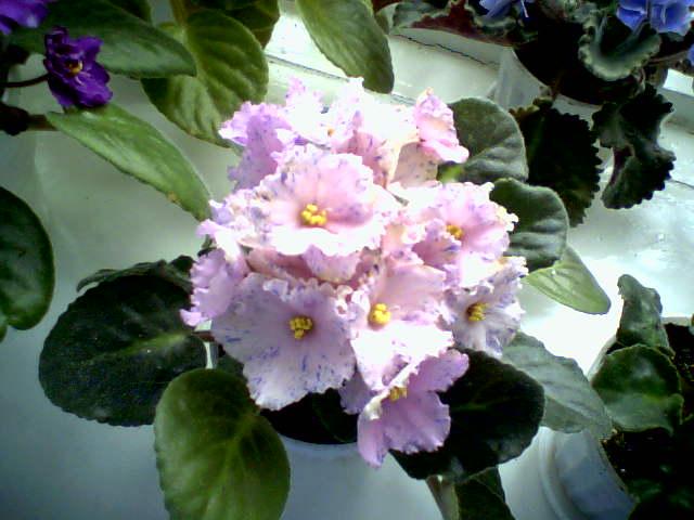 Моё цветочное богатство F4610c23ea1a