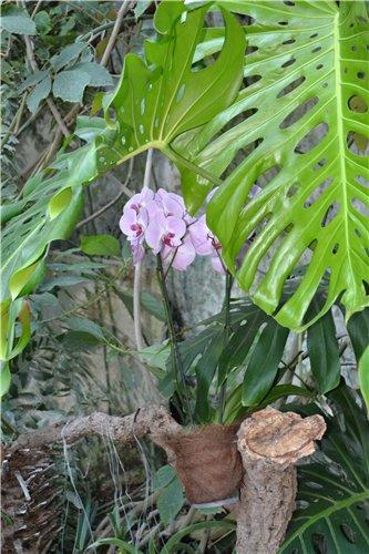 Выставка орхидей Никитского ботанического сада 46048f1a6ff6