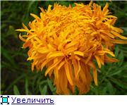 Наши домашние растения - Страница 2 5ab0e92423e3t