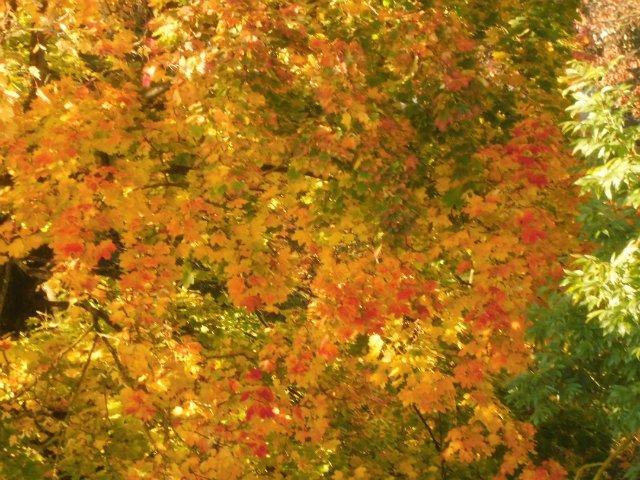 Золотая осень Abc8121343e0