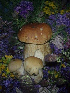 Охота за грибами! - Страница 2 96777f850057