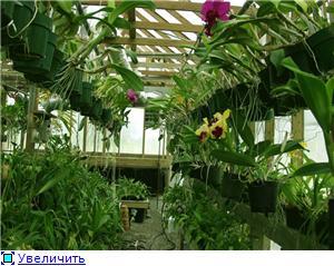 Размещение орхидей F3578fa51e63t