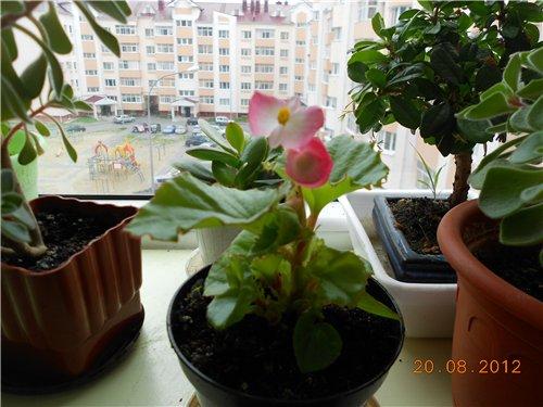 Размножаем семенами и косточками 4681e887c2cd