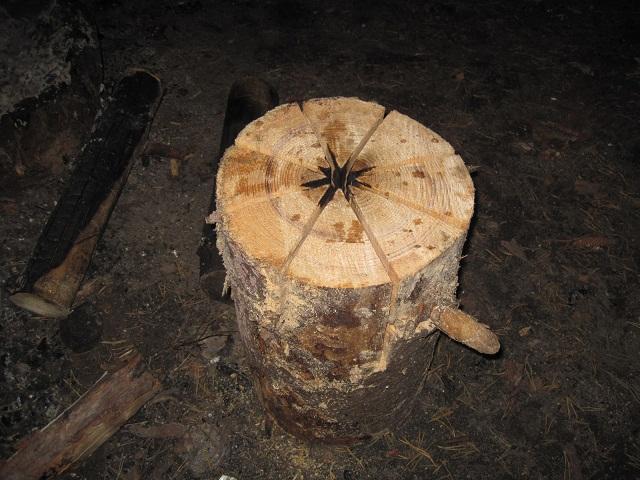 За грибами в Конаково (Тверская область, Волга)! Efaa6c4d8814