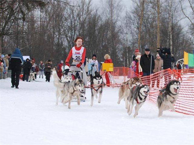 Сибирский Хаски 0ddeb00474ab