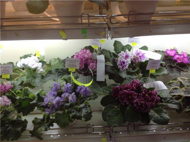 Выставка цветов 3573455d9e48