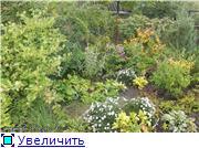 Cад Людмилы Ивановой из черкасс 0a7dda3cf9e9t