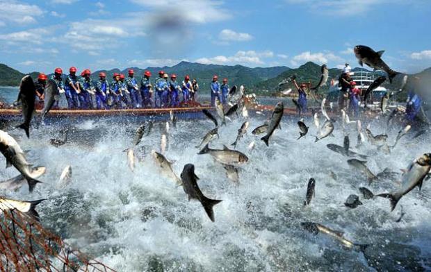 Озеро Циндаоху.Летающие рыбы F6cb4e19d9ee