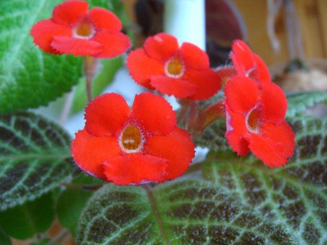 Мои цветочки - Страница 20 Bc16a0c371e3