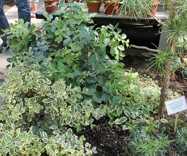 Экскурсия по Ботаническому Саду Ab19e4cb72e9