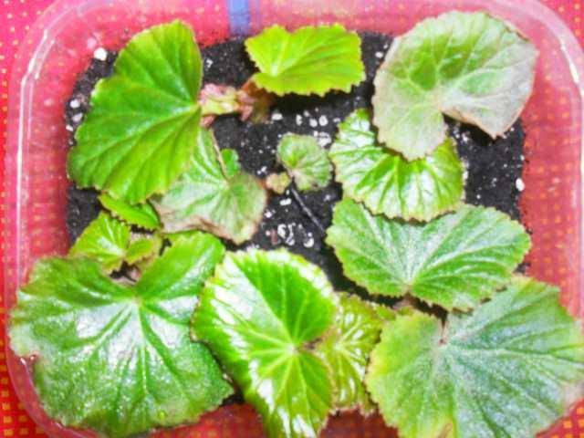 Боремся с болезнями растений D3036cb7c284