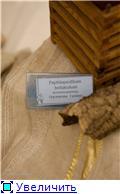 Выставка орхидей в Государственном биологическом музее им. К.А.Тимирязева 440cfcdd7ad7t