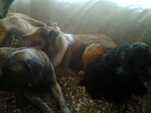 Наши собаки, друзья и гости, кот Мензурка - Страница 30 B28f2eb1a205