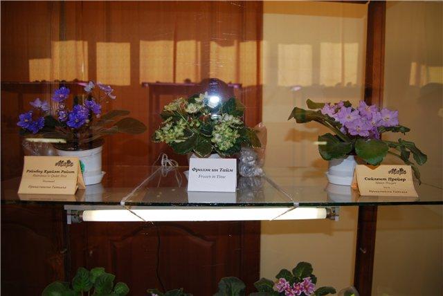 """""""Осенний Блюз""""Выставка фиалок в Омске. E386edbdeb97"""