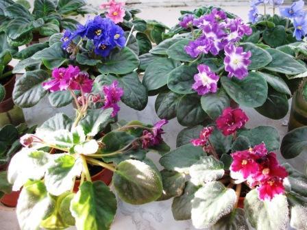 Весеннее  цветение (Хваст от Веры) 506497a6c113
