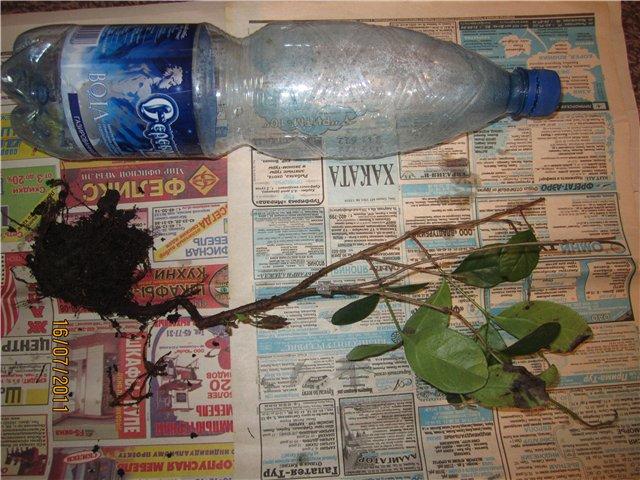 Растения из Сочинского питомника - Страница 2 24d603bab2b6