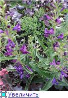 Растения для альпийской горки. - Страница 3 1b66cbc1cbd9t