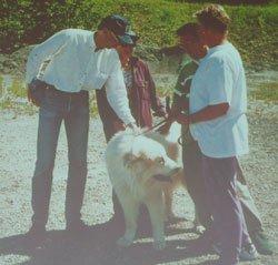 Диалог с собакой: сигналы примирения 3bcf0eb4420a
