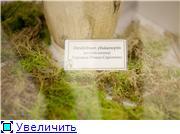 Выставка орхидей в Государственном биологическом музее им. К.А.Тимирязева Aa169d47e959t