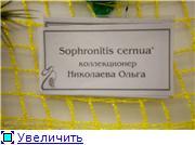 Выставка орхидей в Государственном биологическом музее им. К.А.Тимирязева Adb51ddc53e5t