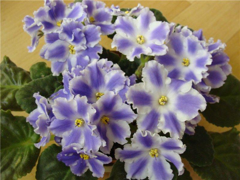 Весеннее  цветение (Хваст от Веры) - Страница 8 976b2b31a54d