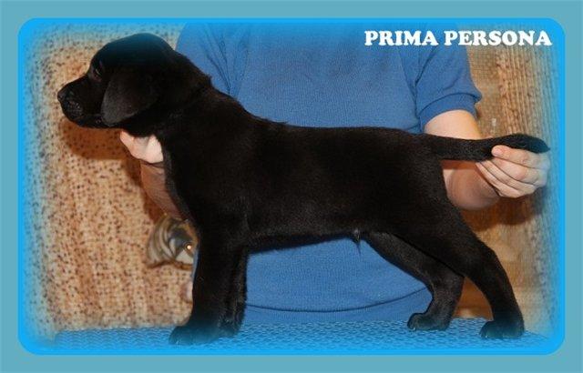 "Питомник ""Прима Персона"". Мои собаки-моя жизнь! - Страница 2 737517aa6c19"