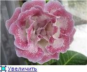 Семена глоксиний и стрептокарпусов почтой - Страница 10 8e58f96b4c2e