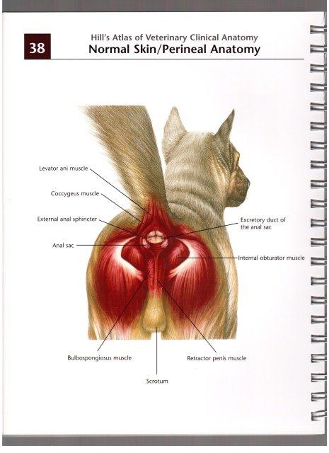 Воспаление параанальных желёз. 443df4ad1b84