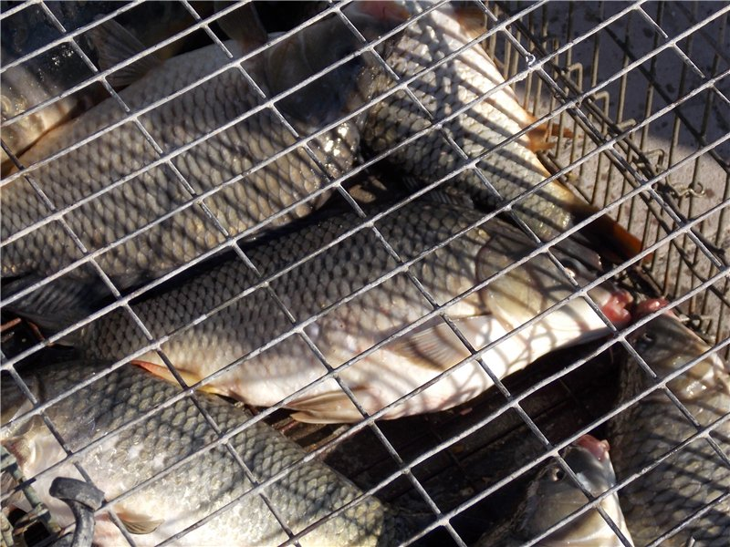 Рыбалка и отдых в Сочи 494b0797be0b