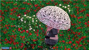 Зонты 2b0c52b69432