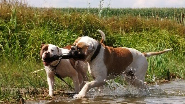 Собаки питомника Carpen Diaz - Страница 2 6f5914d08e3e