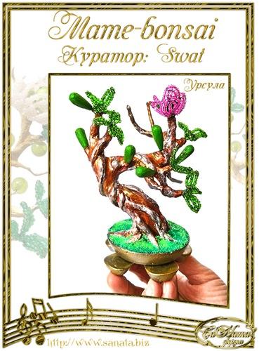 """Галерея """"Mame-bonsai"""" Afb84600acd1t"""