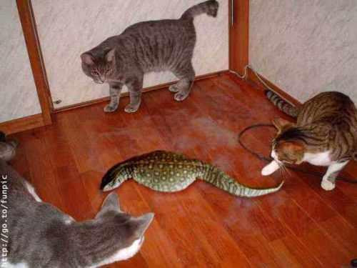 Фотографии кошек 9f00acae7a4e