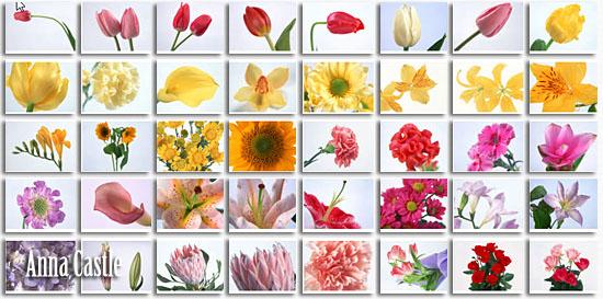 Клипарты  ::  Цветы-разные 718182add3e0