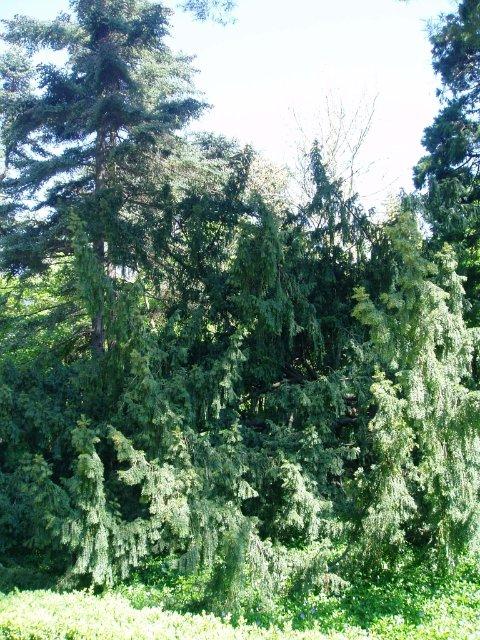 Крым. Никитский ботанический сад. A6c6f3b7d9e8