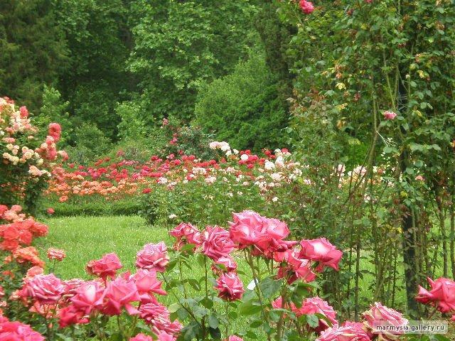 Крым. Никитский ботанический сад. Bbc3817b44c7