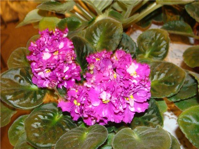 Международая выставка «Цветы.Ландшафт .Усадьба 2010» Астана - Страница 2 2cdd3a06bdc4