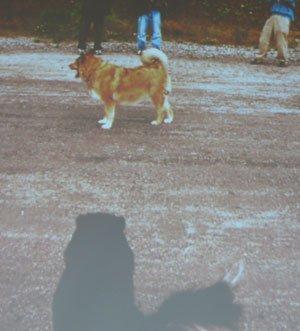 Диалог с собакой: сигналы примирения 45312f8fa30e