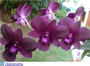 Орхидеи и прочая красота на о. Пхукет 2177f0b3f342t