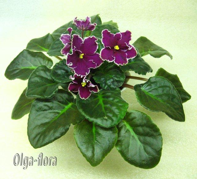 Цветение к Н. Г. (Olga-flora) - Страница 5 C6d33606ca91
