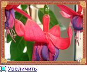 ФУКСИИ В ХАБАРОВСКЕ  4c44e0a5ee3bt