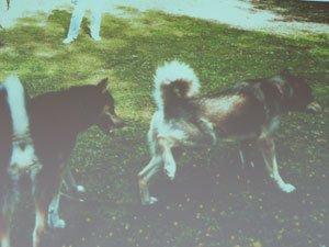 Диалог с собакой: сигналы примирения 98dd2af7f421