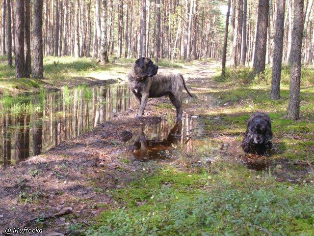 Наши собаки, друзья и гости, кот Мензурка 1caf4ffb1309