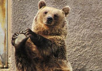 Ничто человеческое медведям не чуждо Aee504218d87