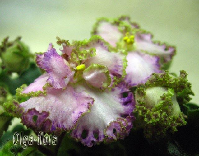 Pretty Poison   (Sorano) 332d5c90108f