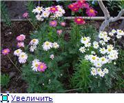 Лето в наших садах 81f1eb7d0db7t