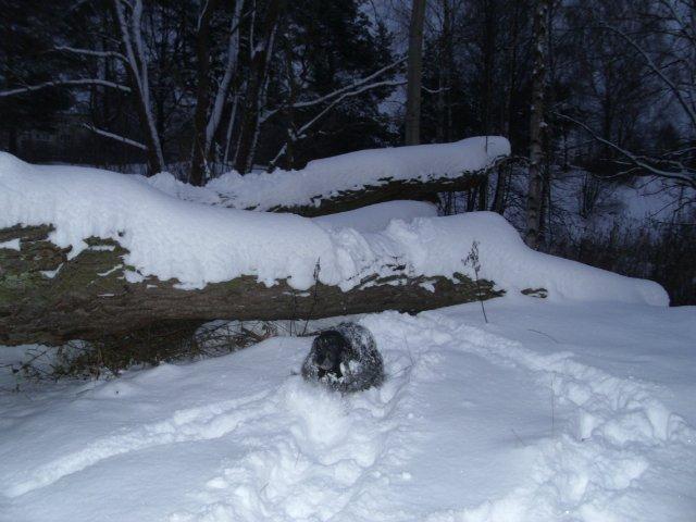 Собаки Татьяны Моисеенковой, кот Мензурка - Страница 3 0438b0f1df89
