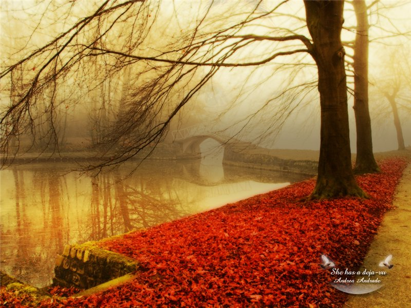 ბუნების ლამაზი ფოტოები 492467747864