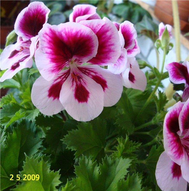 мои любимые цветочки D262f2072944